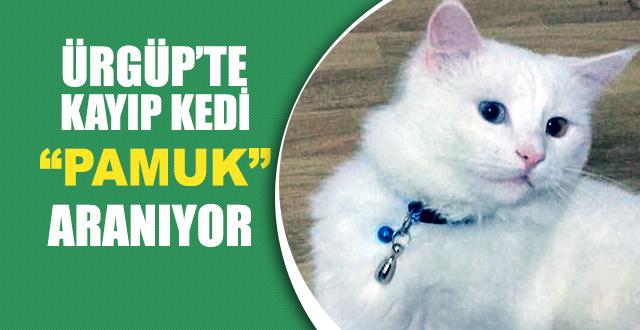 Kayıp Kedi Pamuk Sosyal Medya Aracılığıyla