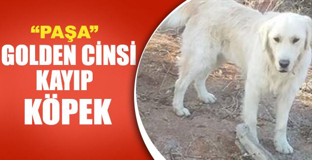 Kayıp Köpek Paşa