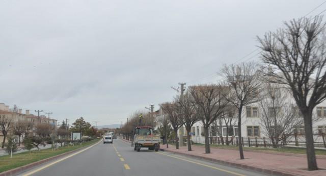 Ürgüp Belediyesi ağaçları