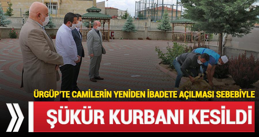 Camilerin açılması sebebiyle Ürgüp'te şükür kurbanı kesildi