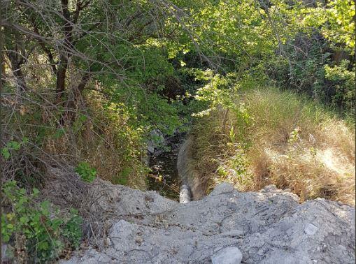 Damsa Sulama Kanalına Ağaçlar için Su Verildi