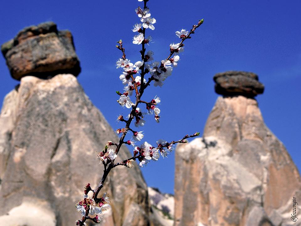 Turistlerin İlkbaharda Kapadokya Keyfi